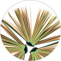 SAGE Knowledge books logo