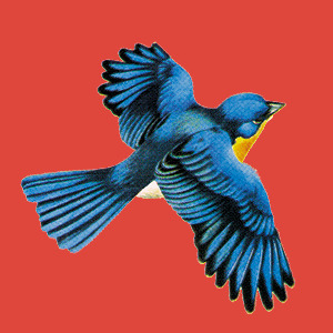 illustration of a blue bird with a red background
